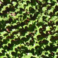 leaves-ivy-tile-free.jpg
