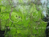 nature11.jpg