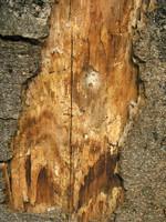 wood0008.jpg