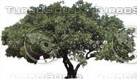 oak0003.ZIP