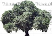 oak0004.ZIP