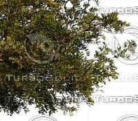 C_Tree0002.ZIP