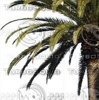 C_Tree0003.ZIP