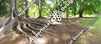 HFD_LScapeTrees01_Med.jpg