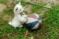 puppy_basketball.jpg