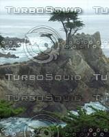 Nature0005.JPG
