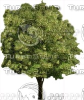 Tree0009.ZIP