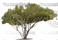 Tree0022.ZIP