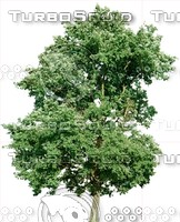 Tree0023.ZIP