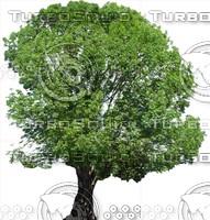 Tree0026.ZIP