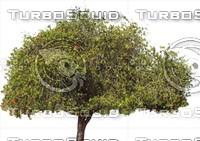 Tree0027.ZIP