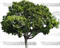Tree0028.ZIP