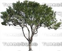 Tree0032.ZIP
