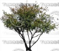 Tree0035.ZIP