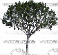 Tree0036.ZIP