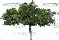 Tree0038.ZIP