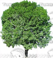 Tree0039.ZIP