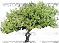 Tree0042.ZIP