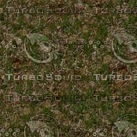 WSH Crabby grass