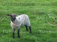 animals 028.jpg