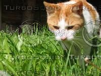cat016.jpg