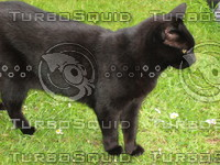 cat142.jpg