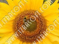 flowerP1010393orig.zip