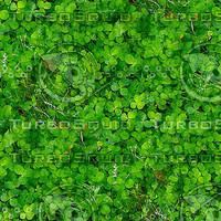 garden_jpg.zip