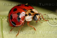 ladybug001.jpg