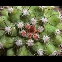 Little-Cactus.JPG