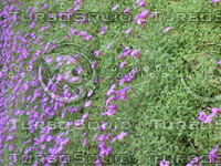 plants050.jpg
