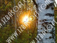 Sunset_West_Siberia_sunsP1010420orig.zip