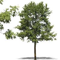 tree5.psd