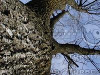 wood0347.jpg