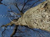 wood0357.jpg
