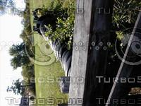 wood0611.jpg