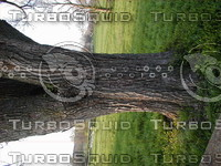 wood0623.jpg