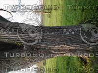 wood0624.jpg