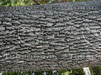 wood0706.jpg