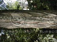 wood0748.jpg