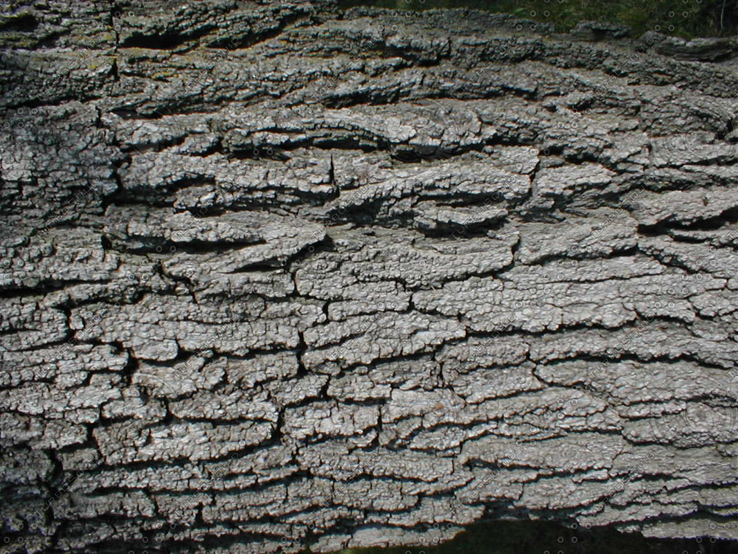 Wood 0758 Tree Bark Texture Stock Photo