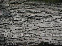 wood0758.jpg