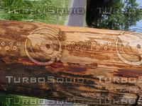 wood0764.jpg