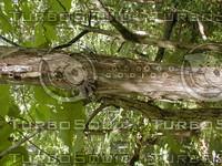 wood0808.jpg