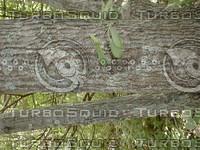wood0812.jpg