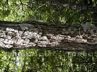 wood0861.jpg