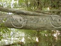 wood0865.jpg