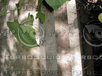 wood0873.jpg