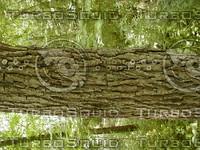 wood0876.jpg