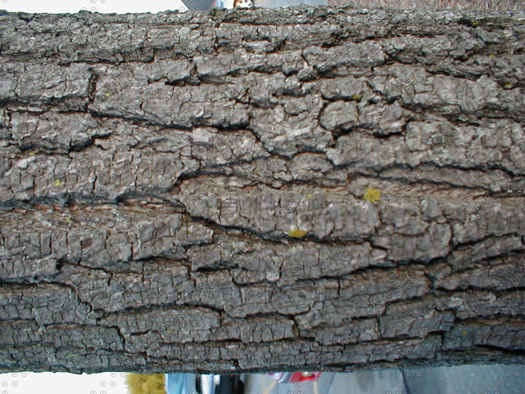 Royalty Free Stock Photo of Tree Trunk Bark